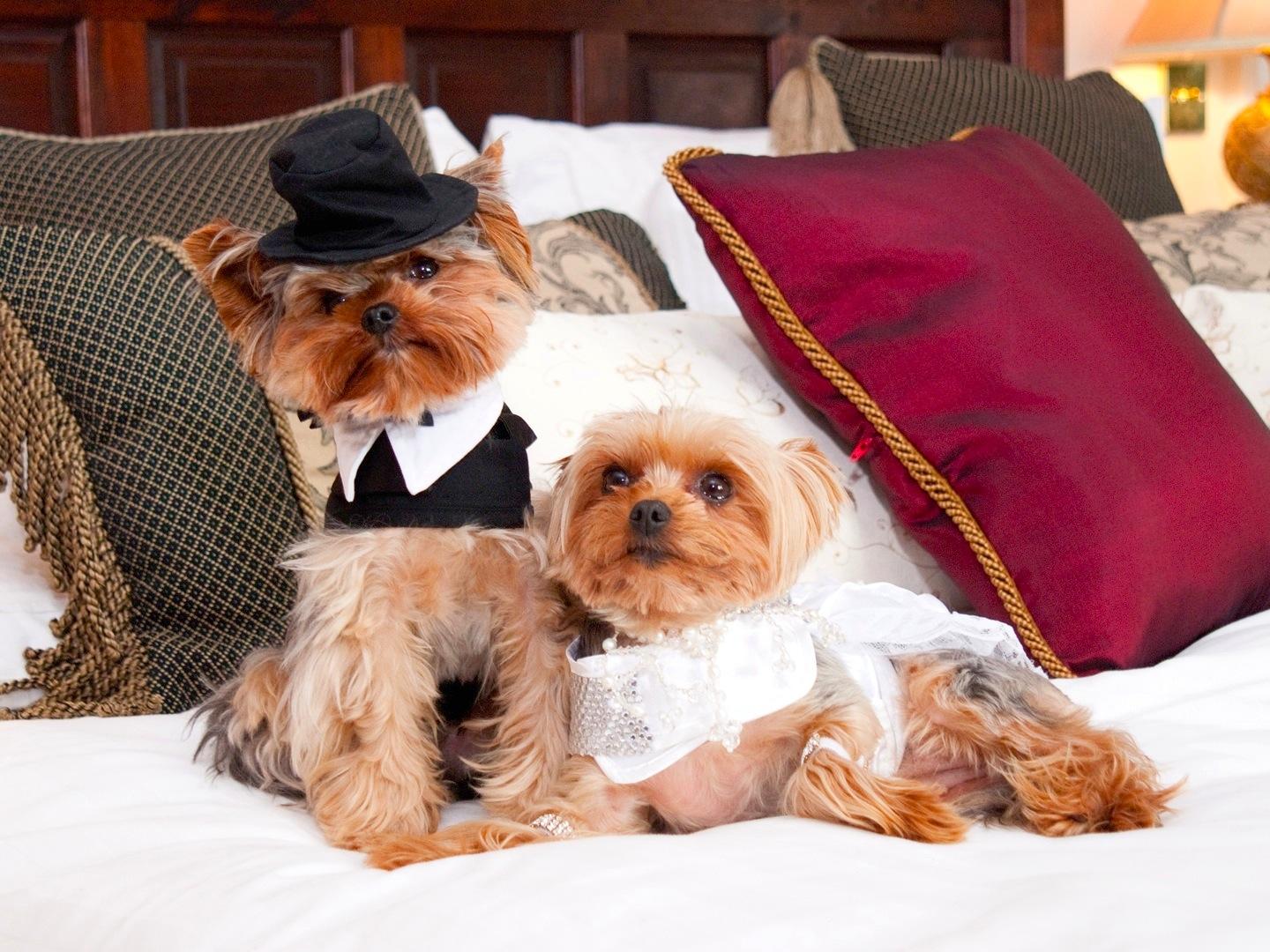 Английская свадьба. Лола и Мугли