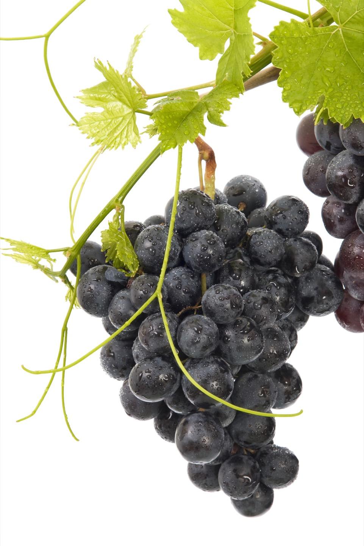 Фрукты для декоративных композиций. Виноград